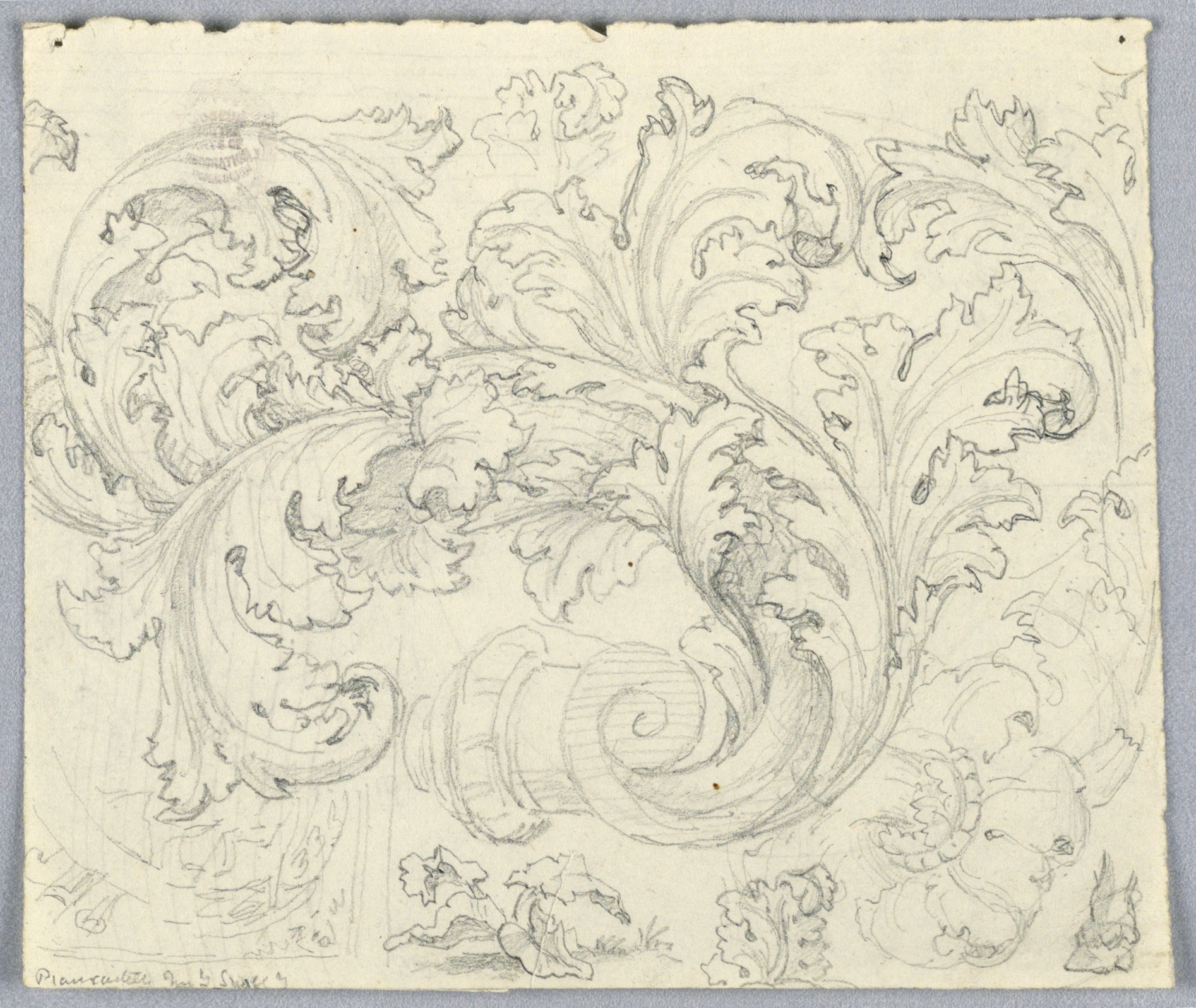 Study for Curling Acanthus Ornament