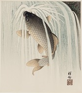 : Carp ascending a waterfall