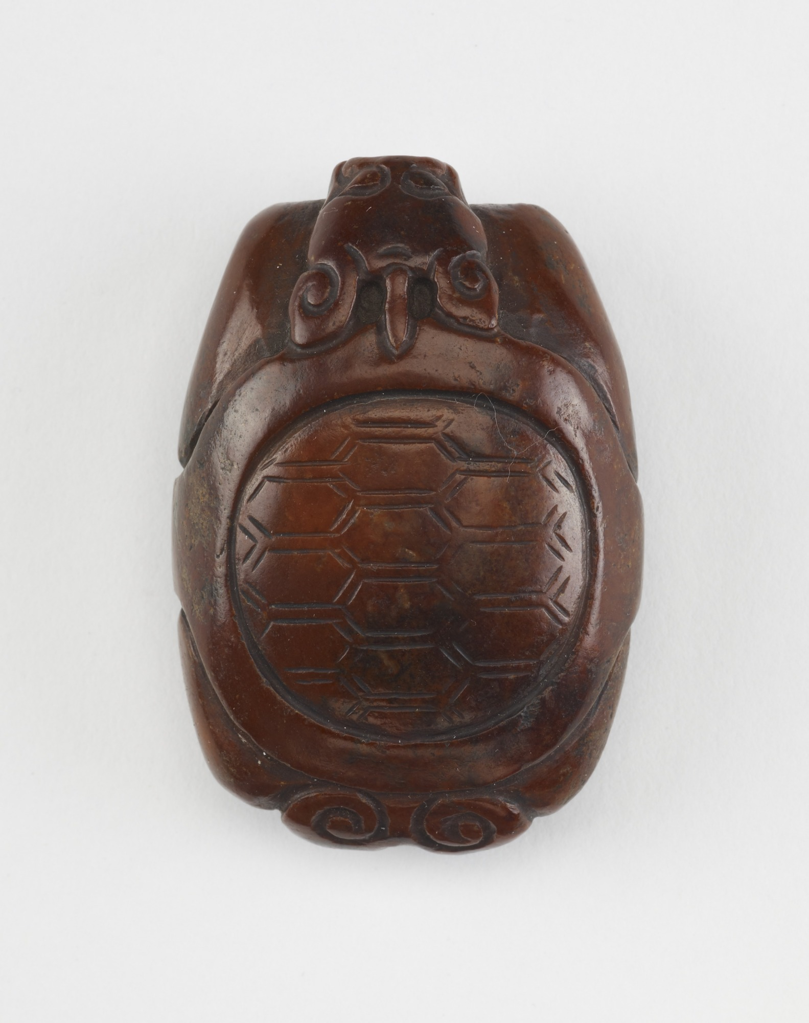 Tortoise with dragon head