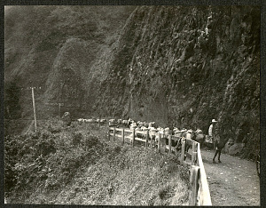 mule train along a mountain road