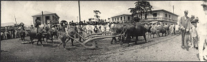 Iloilo City: Parade of farmers with oxen and plows
