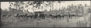 Mindanao: Riders in the jungle, carriage holding William H. Taft and Alice Roosevelt at center
