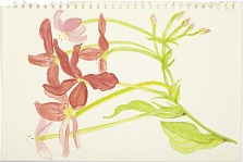 Elizabeth Moynihan Collection, Series 5: Notebook 3: Drawings of Flowers
