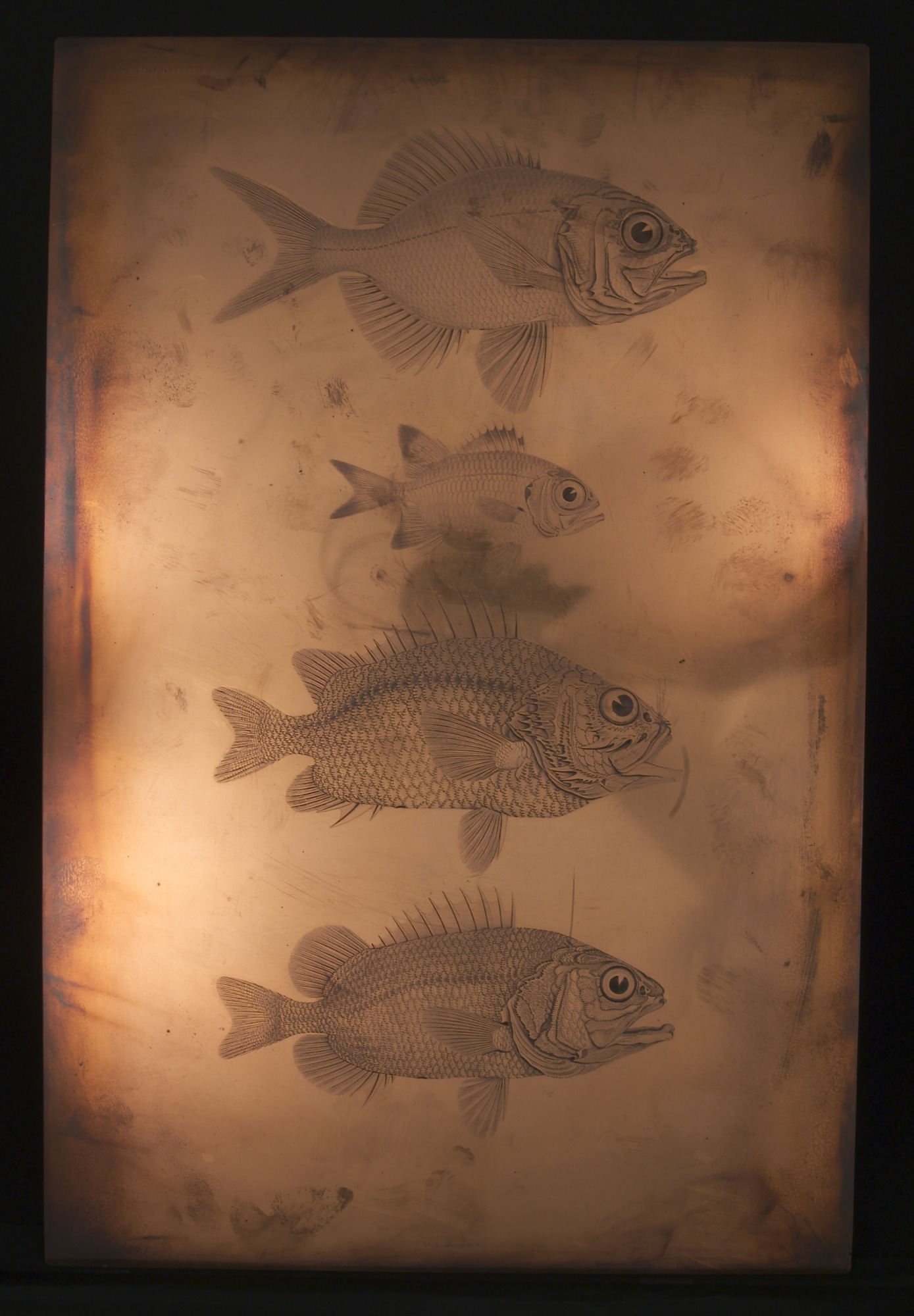 "Engraved printing plate ""Ichthyology, Pl."""