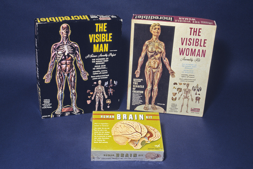 The Visible Man | National Museum of American History