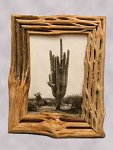 Framed Photograph of a Giant Cactus