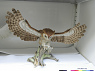 Screech Owl from National Museum of American History ... See More