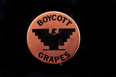 Boycott Grapes Protest Button