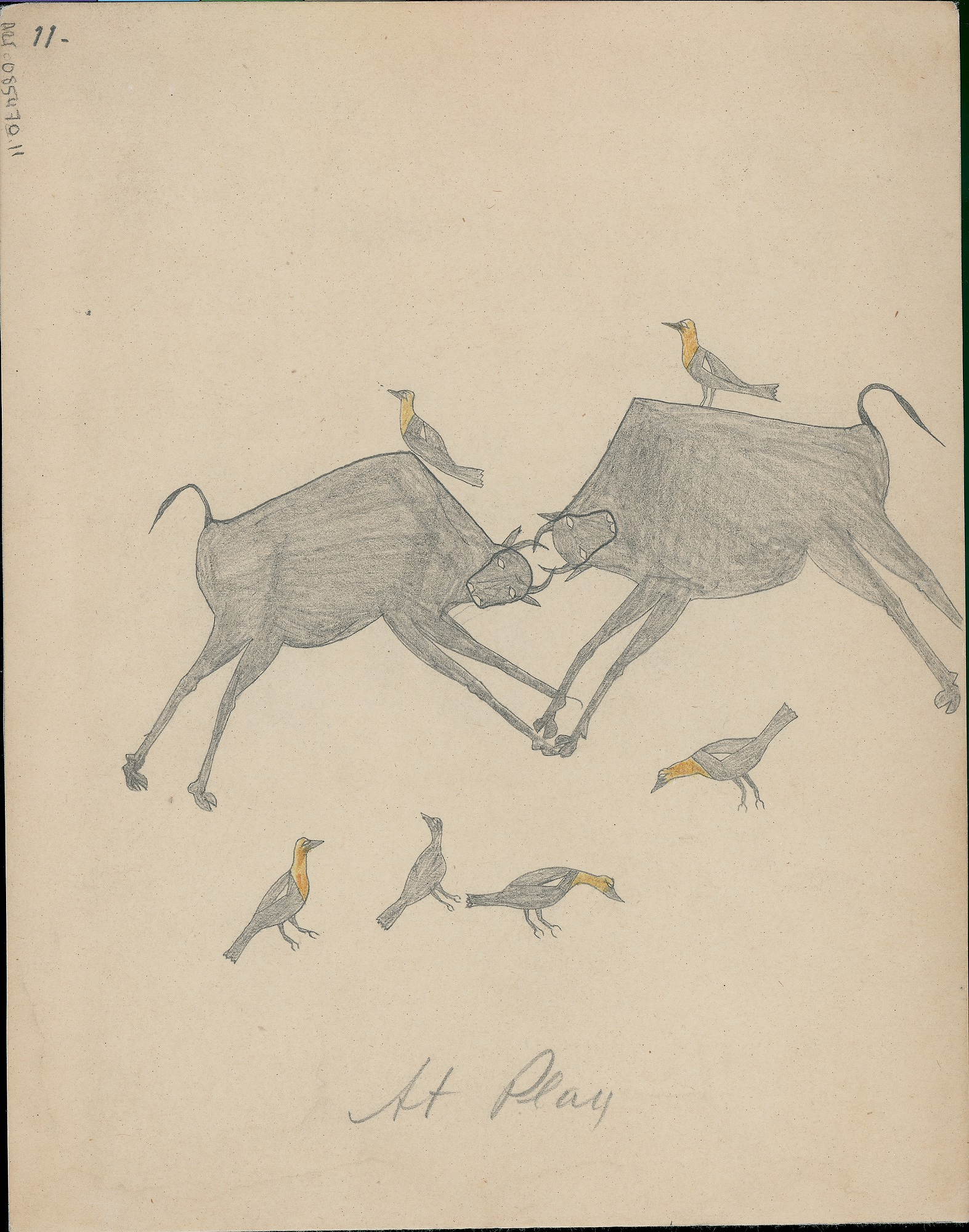 Anonymous Cheyenne drawing of two buffalo locking horns with yellow-headed buffalo birds on their backs and on ground, 1875 August