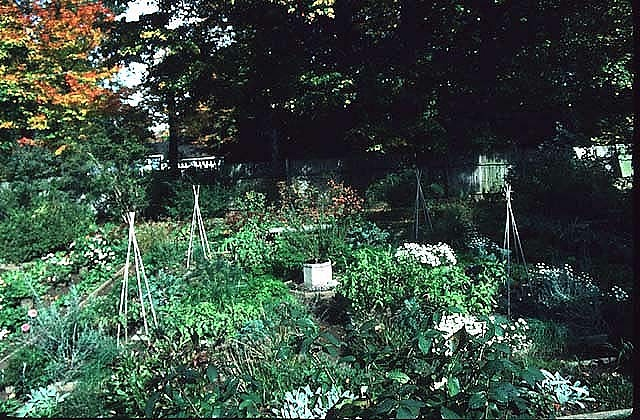 Vegegable Gardens