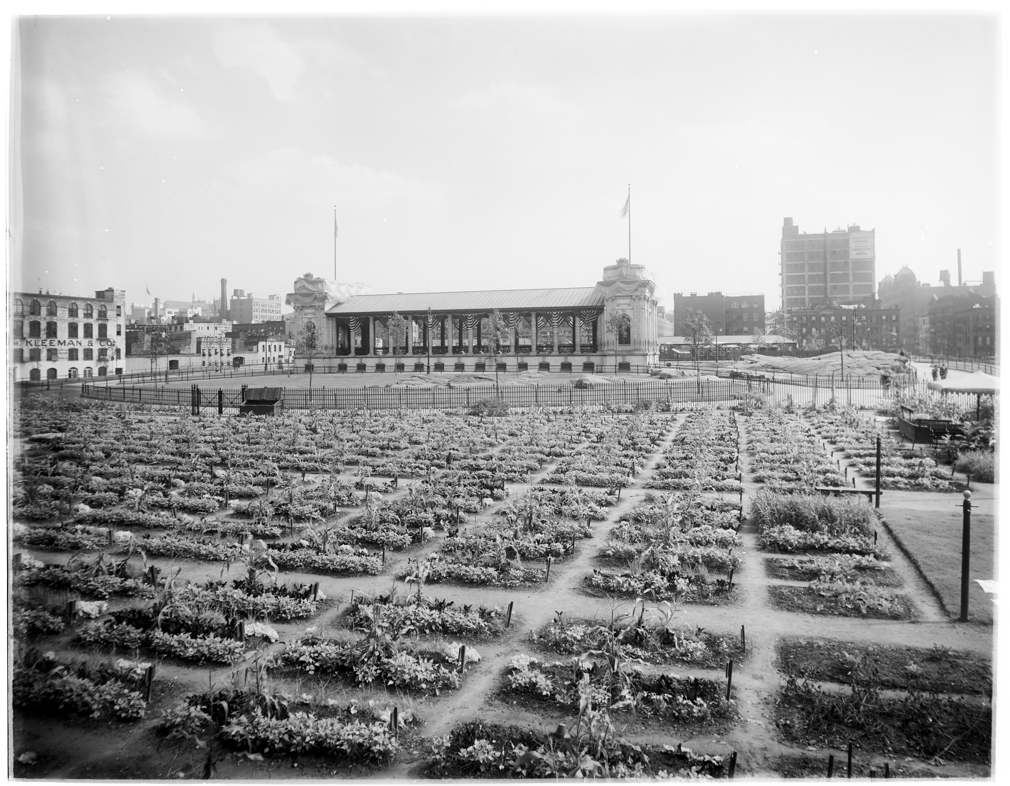 Children's garden plots, DeWitt Clinton Park, New York City, 1909