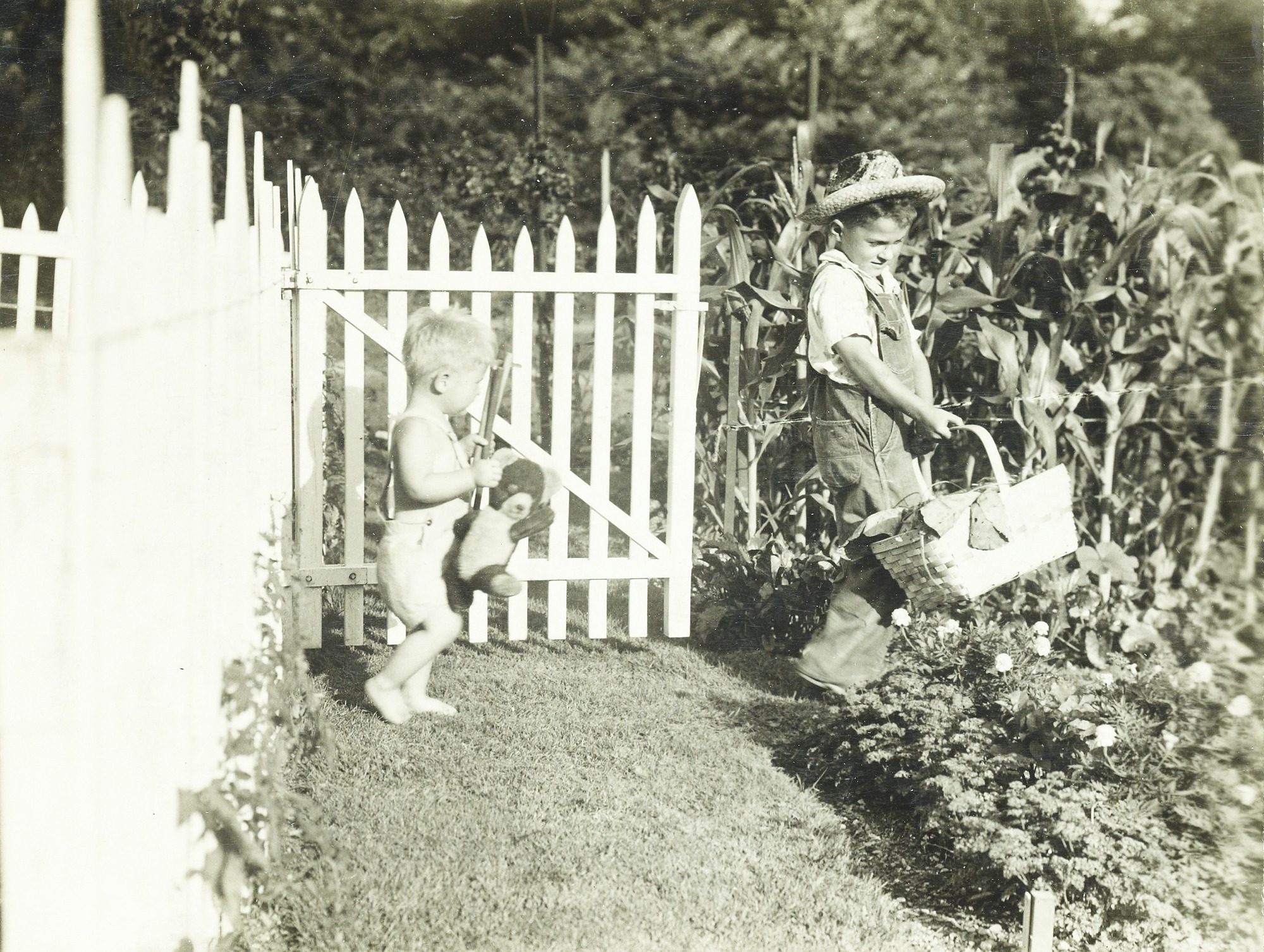 Victory garden at Breeze Hill, Harrisburg, Pennsylvania, July 11, 1942