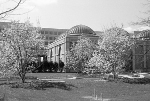 Image of NMAfA and Haupt Garden in the Spring