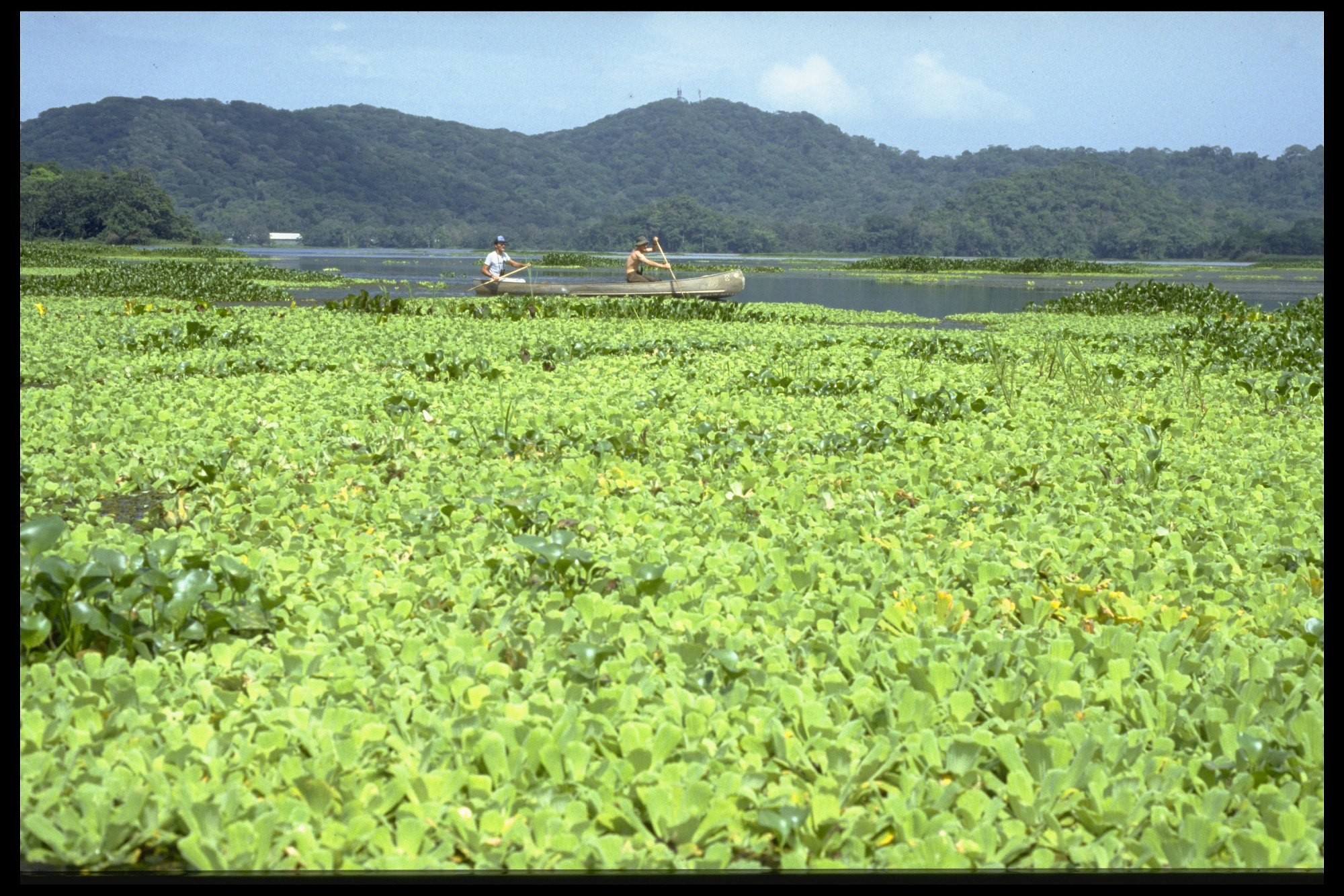 STRI Fellows on River, Panama, 1990, Smithsonian Institution Archives, SIA Acc. 11-009 [92-1955].