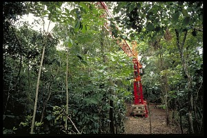 Image of Crane Visible Through Tree Canopy, Panama, STRI