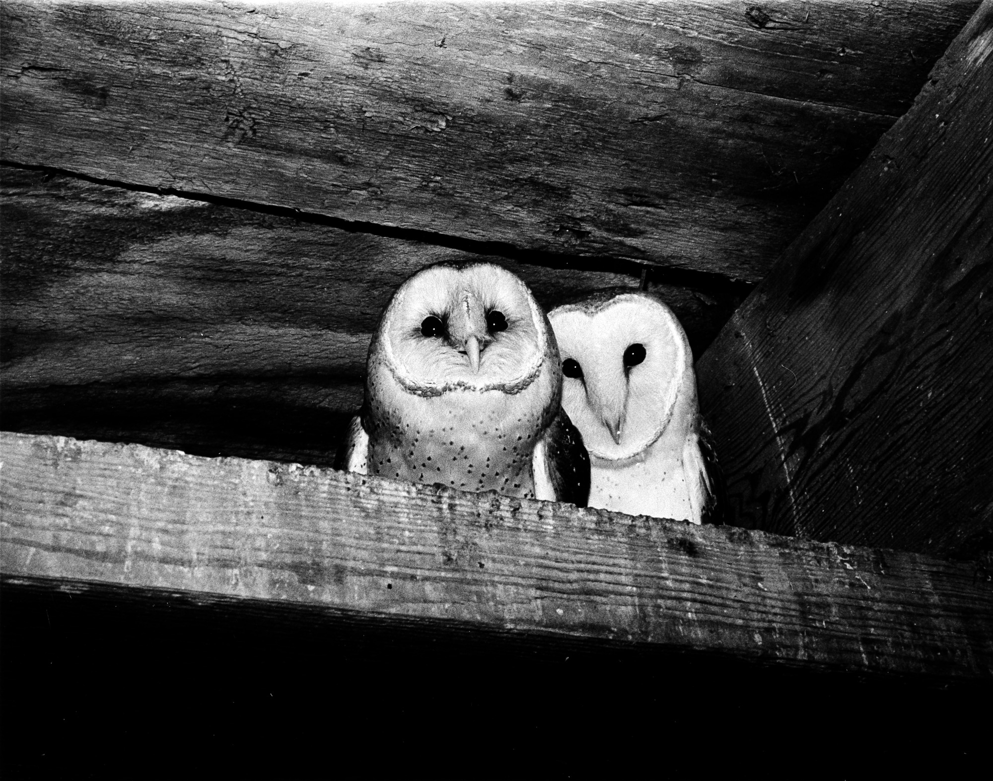 Owls in the Castle Tower, by Johnson, Michael, 1977, Smithsonian Archives - History Div, 96-929.