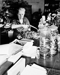 Image of Doris M. Cochran Working on Collections