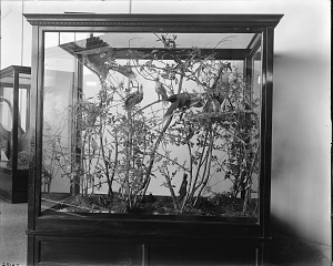 Image of Bird Hall, United States National Museum, pre-1956