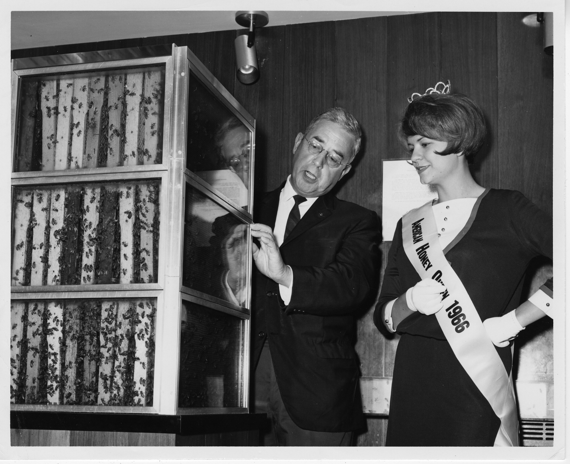 Beehive Exhibit in Museum of History and Technology, June 8, 1966