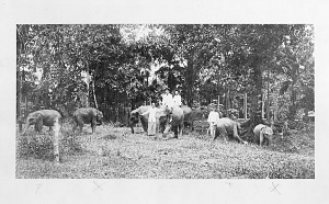 Image of Young Elephants and a Group of Unidentified People in a Forest Clearing