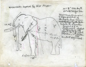 Image of Diagram with Measurements of the Fénykövi Elephant