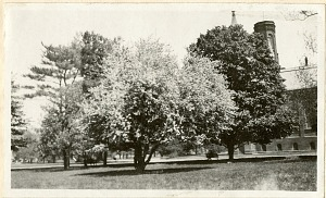 Image of Trees and Flowers with the Smithsonian Castle in the background