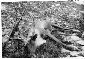 Image of Caribou #2