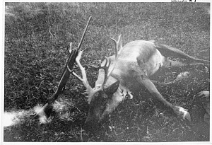 Image of Caribou #3