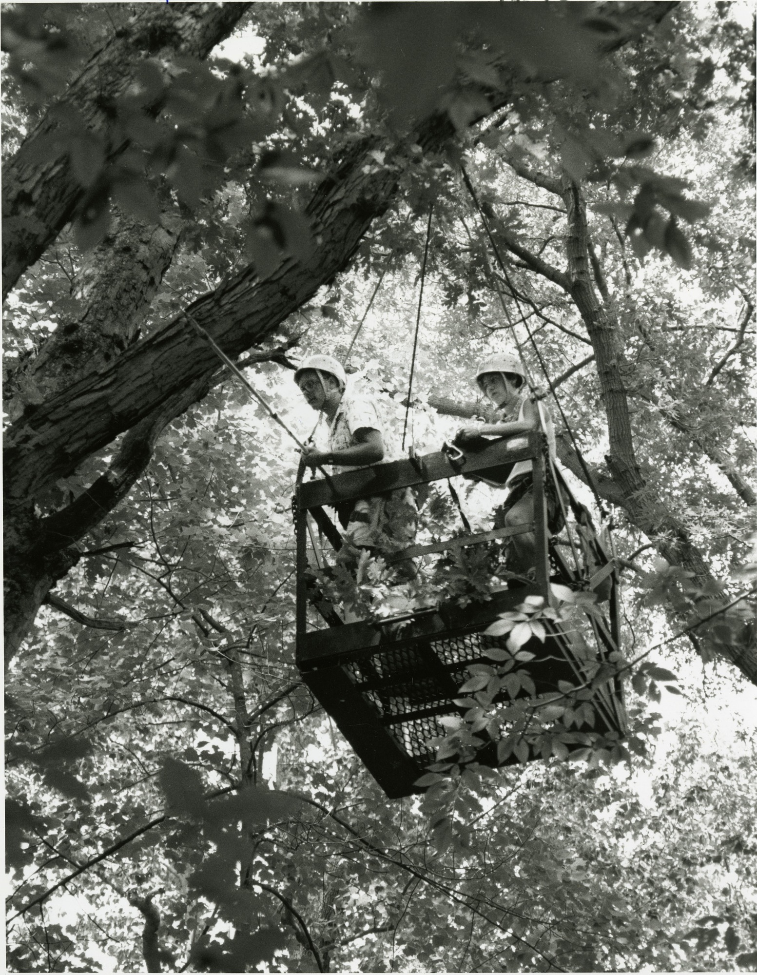 Canopy Crane at SERC, by Tinsley, Jeff, 1994, Smithsonian Archives - History Div, SIA2011-2236.