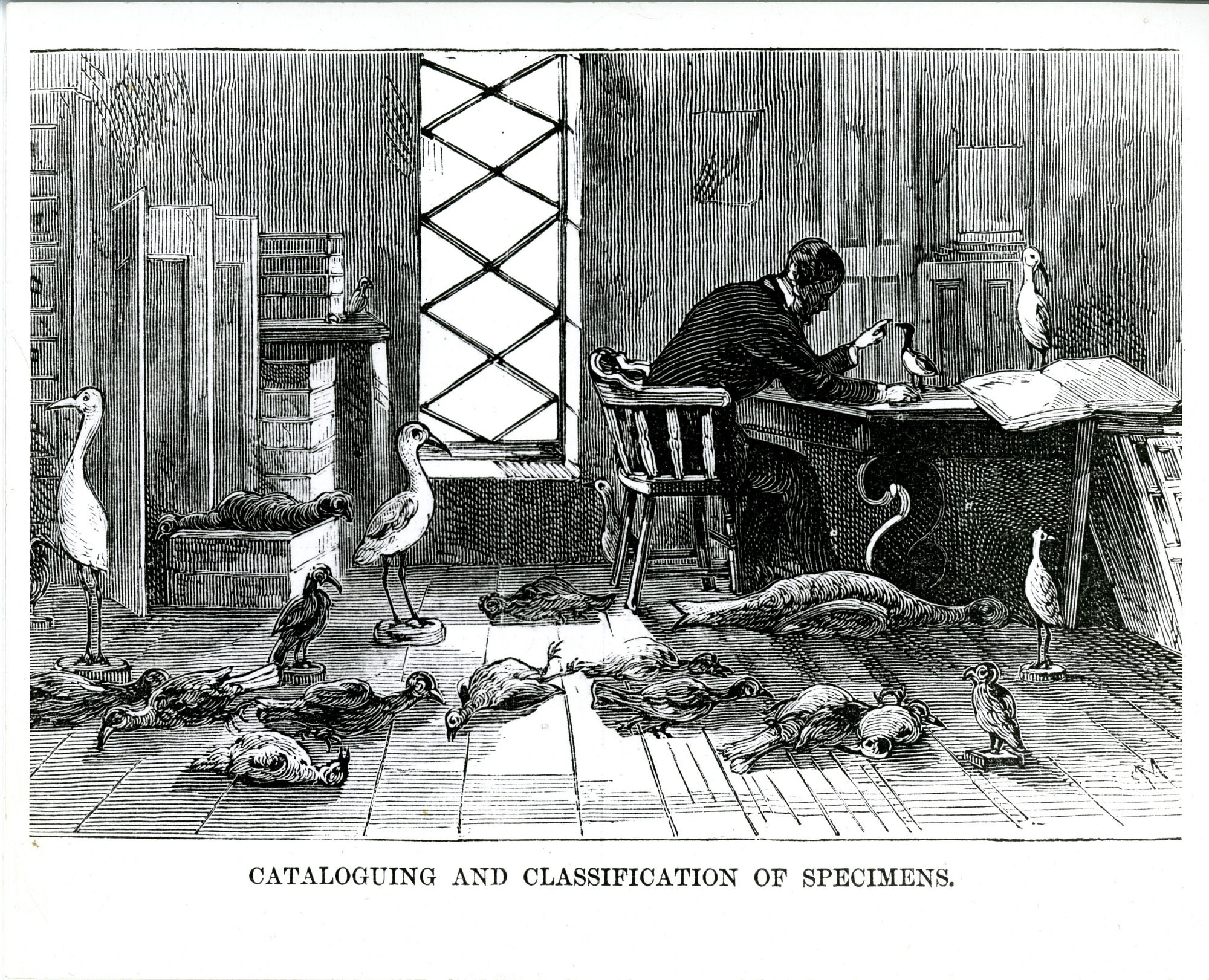 "Engraving is of a scientist sitting at a table with a taxidermied bird in front of him as he catalogs bird specimens in the Natural History Laboratory of the Smithsonian Institution Building or ""Castle,"" from an 1857 guidebooks, Smithsonian Institution Archives, negative number SIA2011-2391."