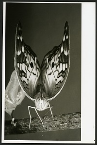 Image of Portrait of a Butterfly
