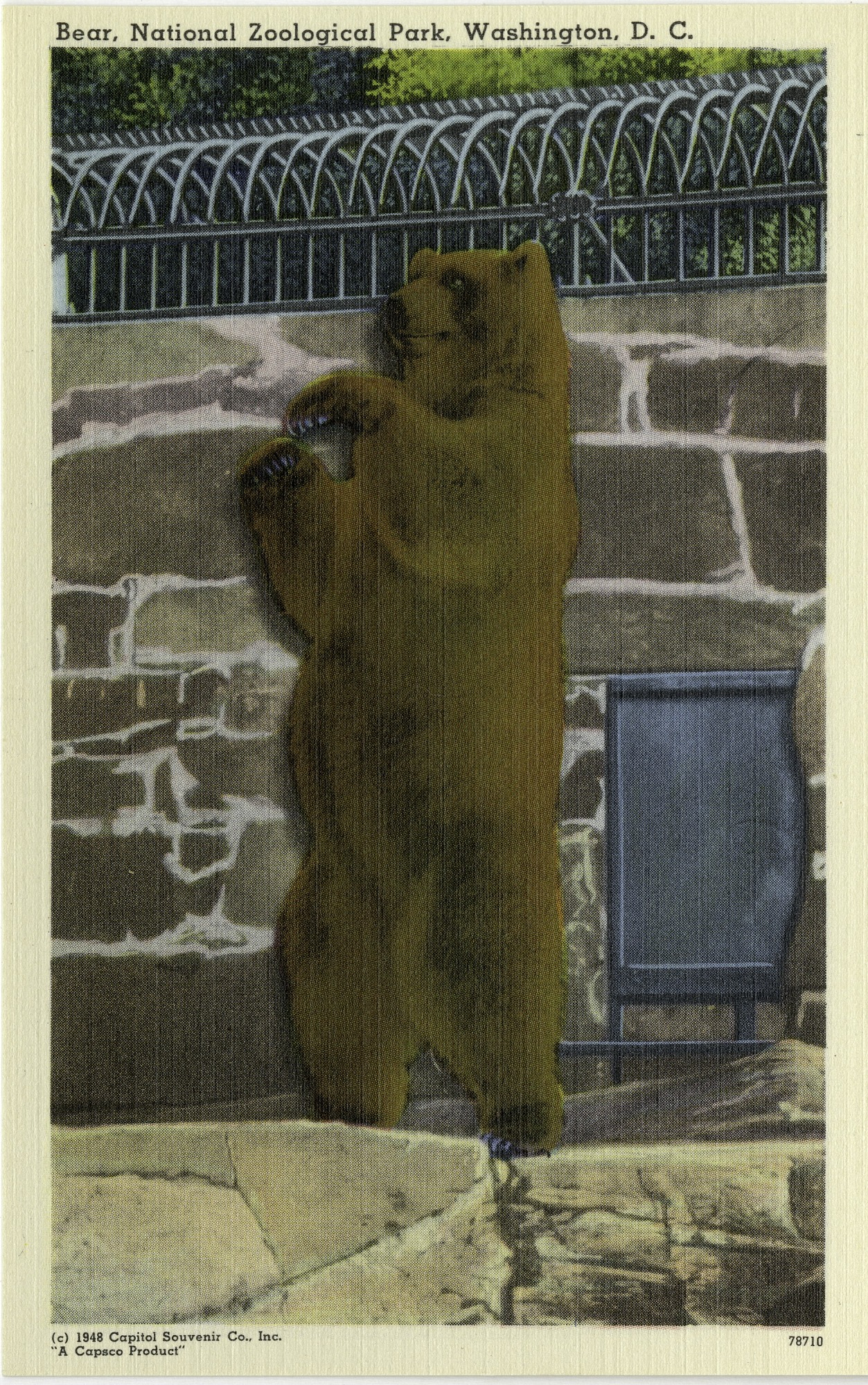 Postcard of a Bear at the Zoo