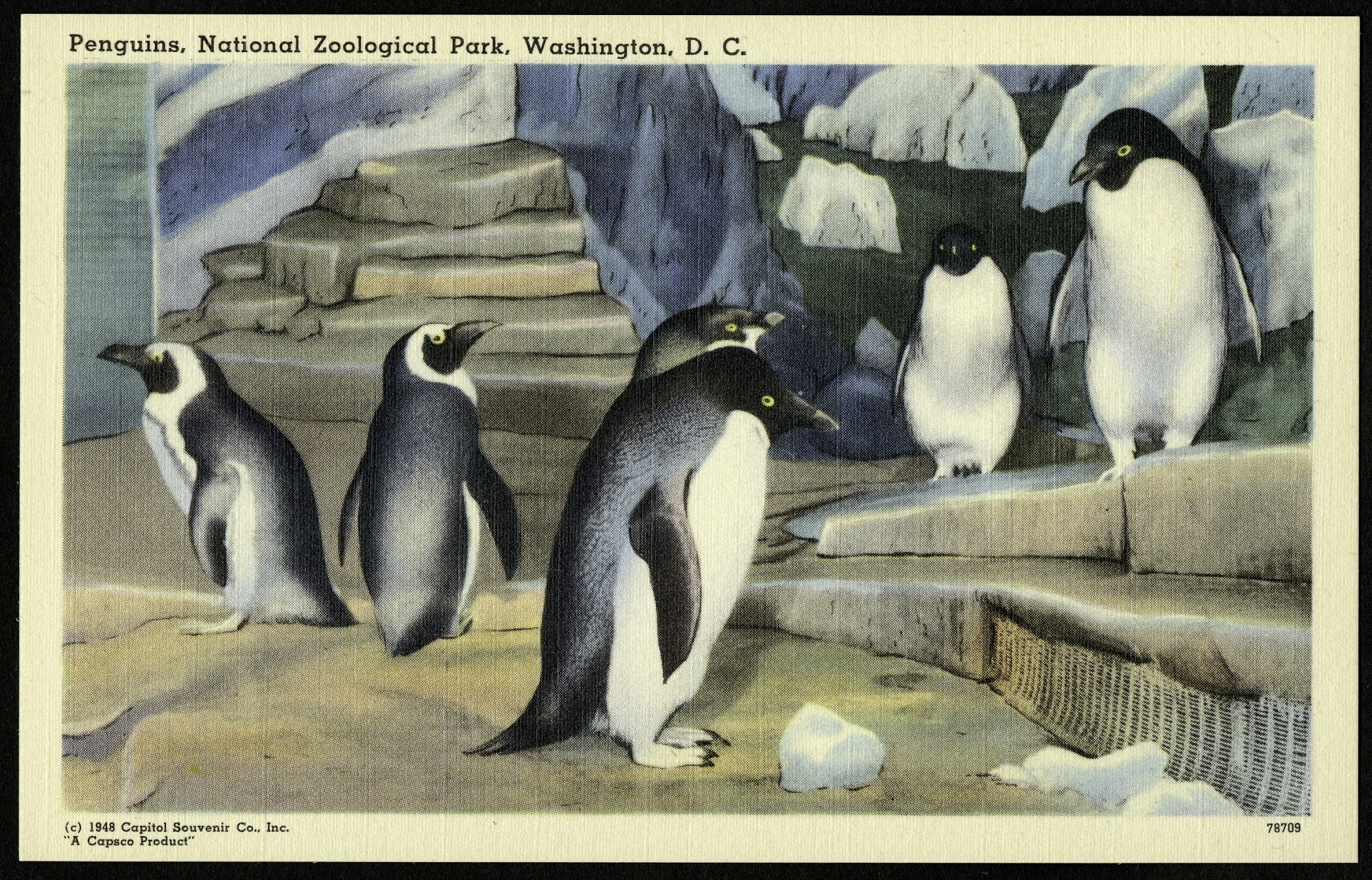 Blank Postcard of Penguins at the Zoo