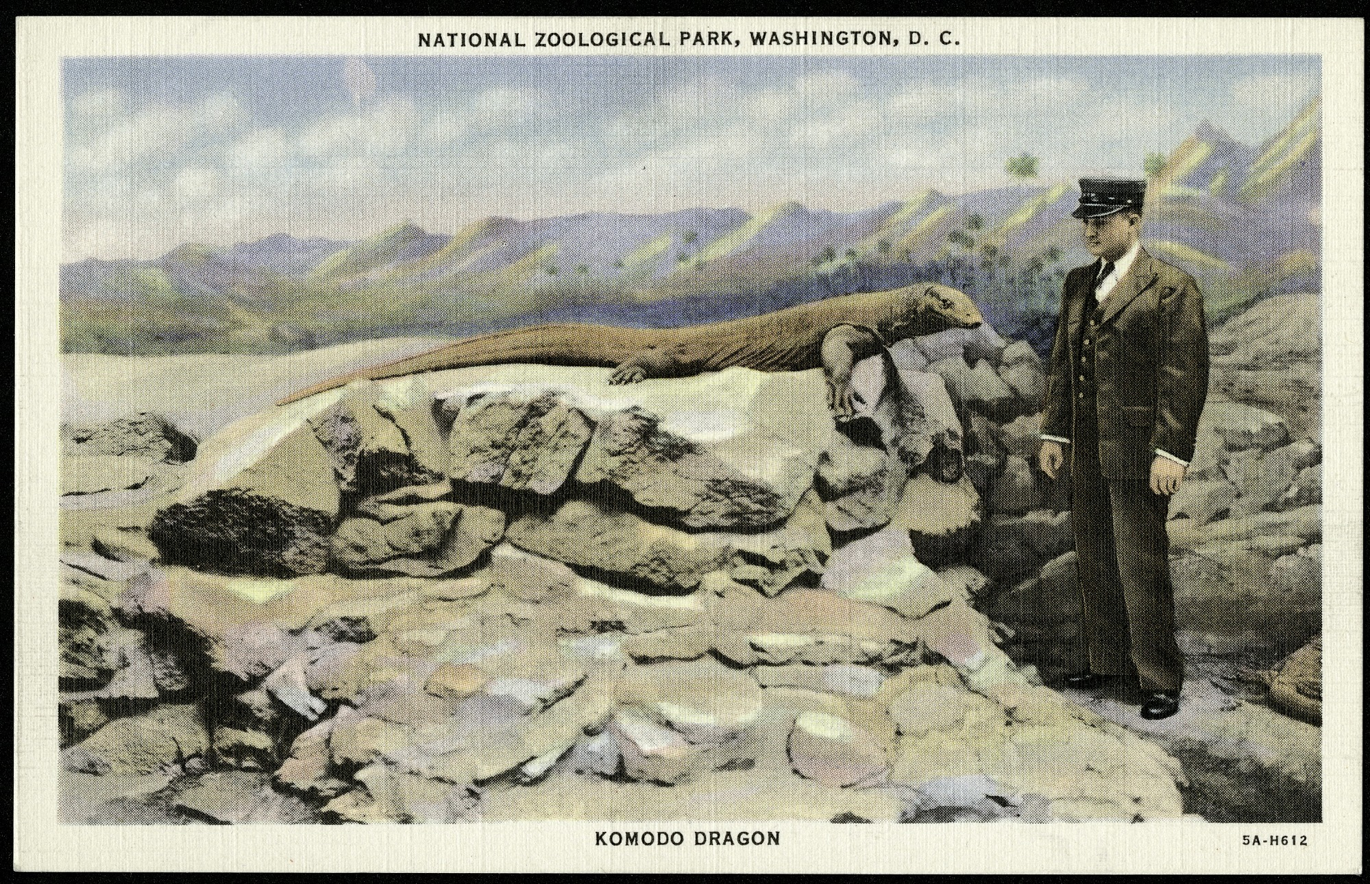 Postcard of a Komodo Dragon