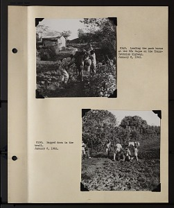 Image of Album 1 Panama, 1962 : volume 1, includes photographs of Wetmore, Beatrice Thielen Wetmore, Charles O. Handley, Jr., Helena M. Weiss, and Francis Greenwell