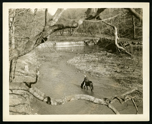Image of Rock Creek Park