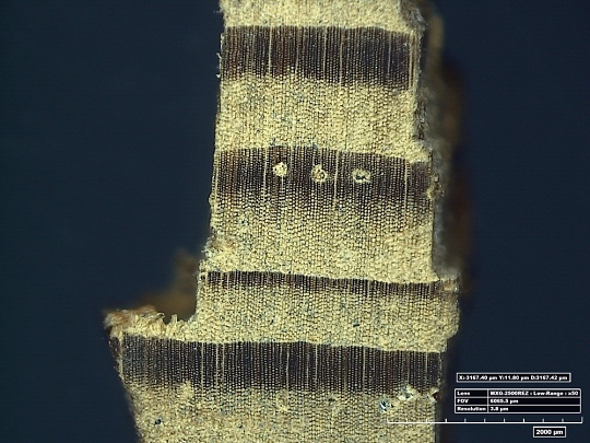 Microscopic View of Horten Lumber