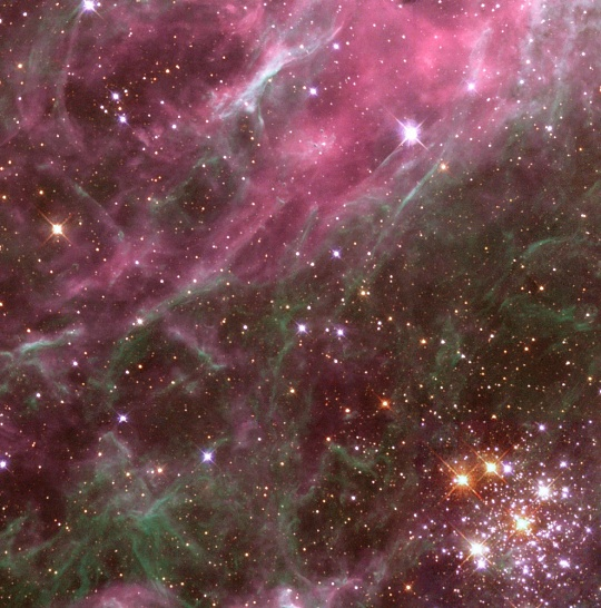 Stars in the Tarantula Nebula