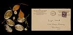 Representative image for Joseph Cornell papers, 1804-1986, bulk 1939-1972