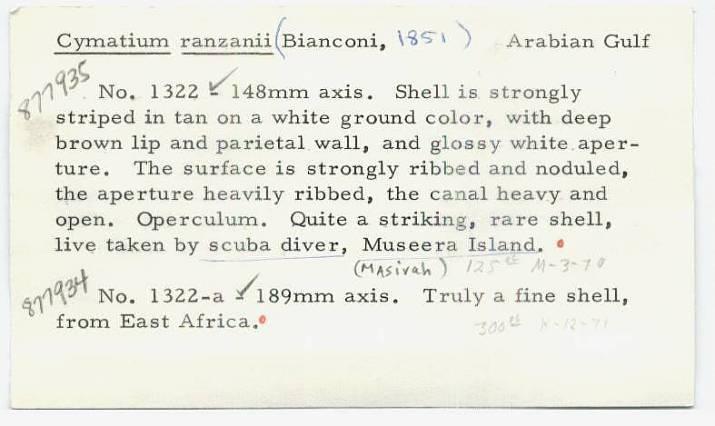 Cymatium ranzanii image