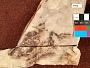 Plioplarchus septemspinosus Cope
