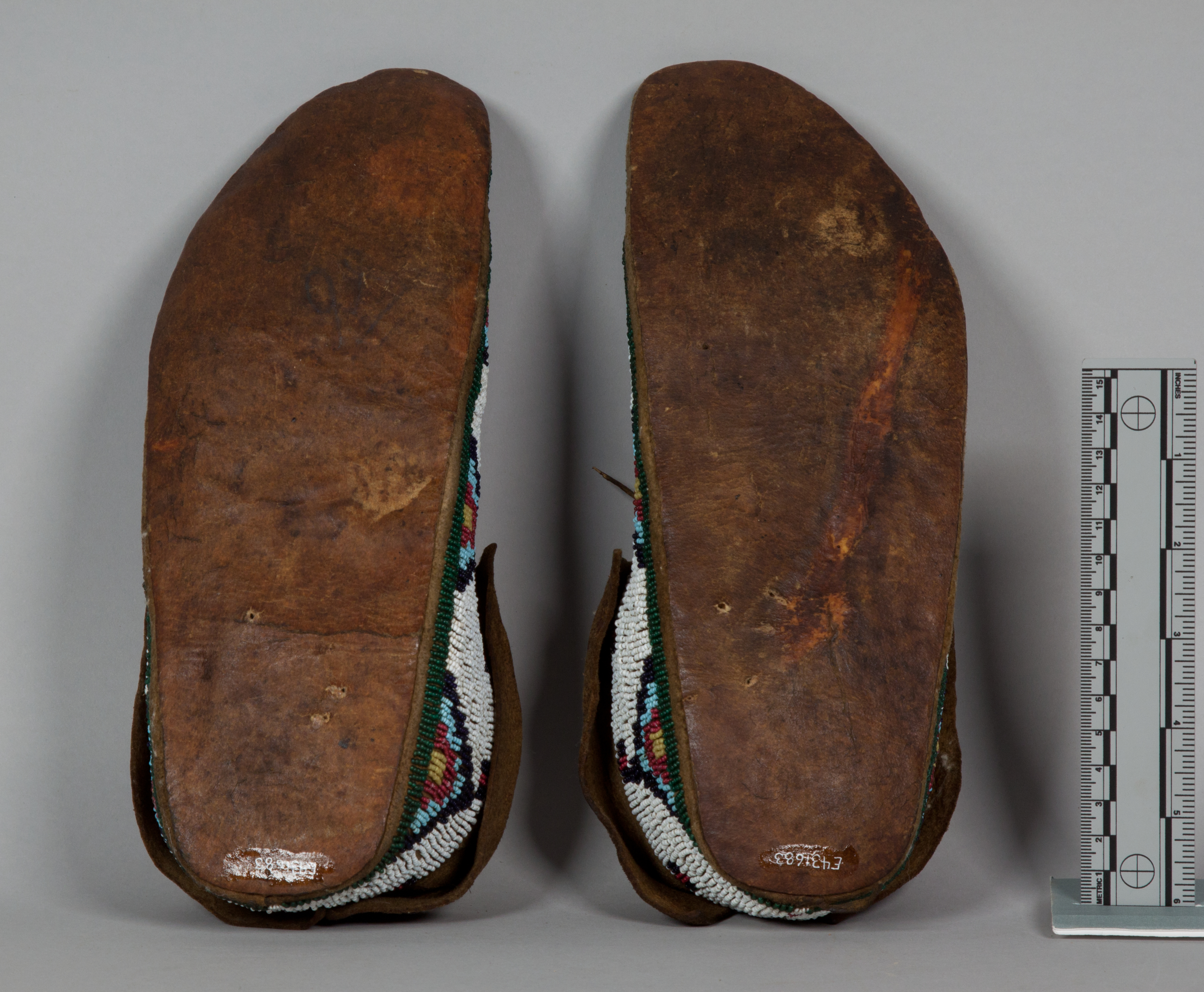 Adult Moccasin