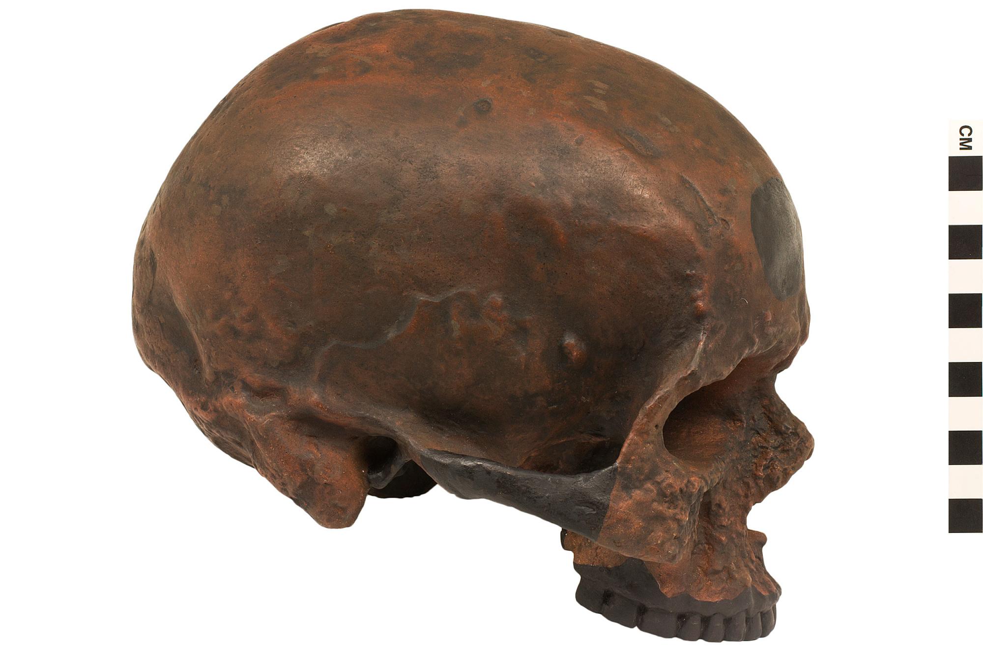 cranium tesco