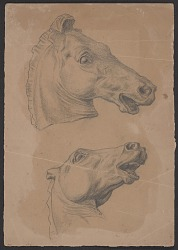 Sketch of a horse's head from two different angles