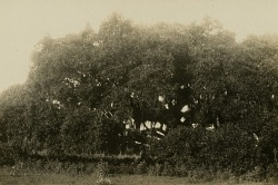 Scenery from an unidentified Gullah community
