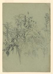 Study of foliage