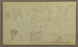 Botanical Sketches; Verso: Lizard, Palm
