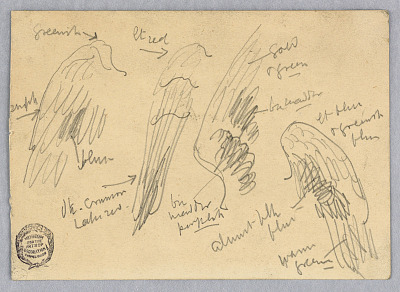 Sketches of Wings