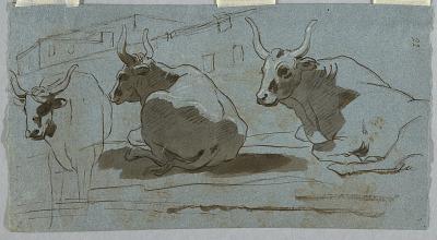 Sketches of Bulls