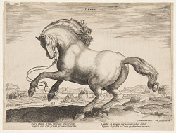 """A Danish Horse, from the fourth set of """"Equile Joannis Austriaci"""""""